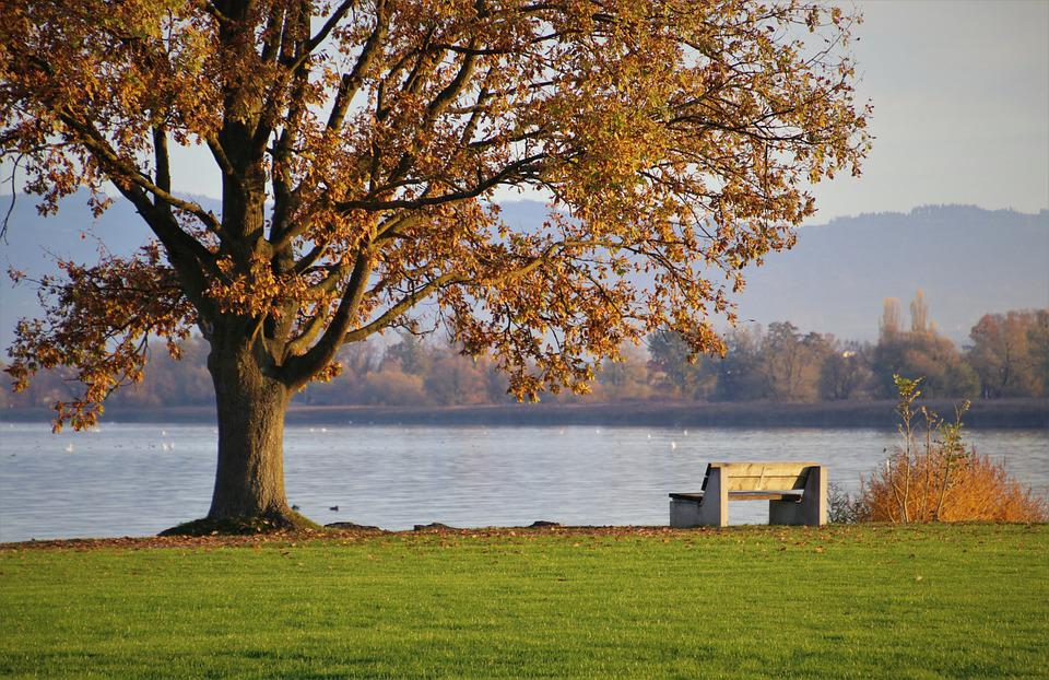 Tree, Bench, Lake, Park, Konary, Leaves, Quiet, Bank