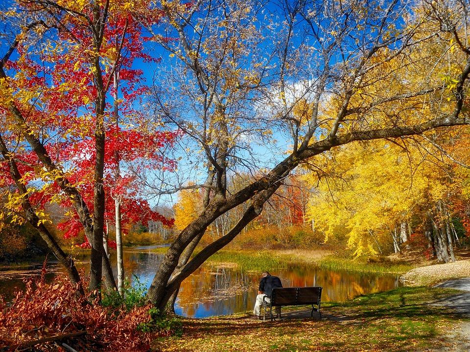 Autumn, Leaves, Landscape