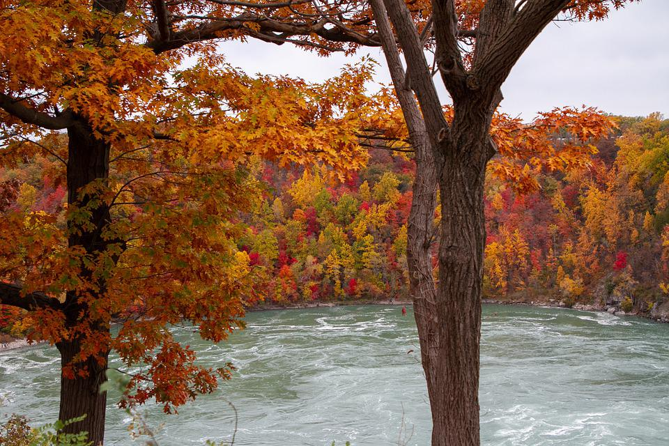 Autumn, Fall, Leaves, Tree, Colorful, Landscape