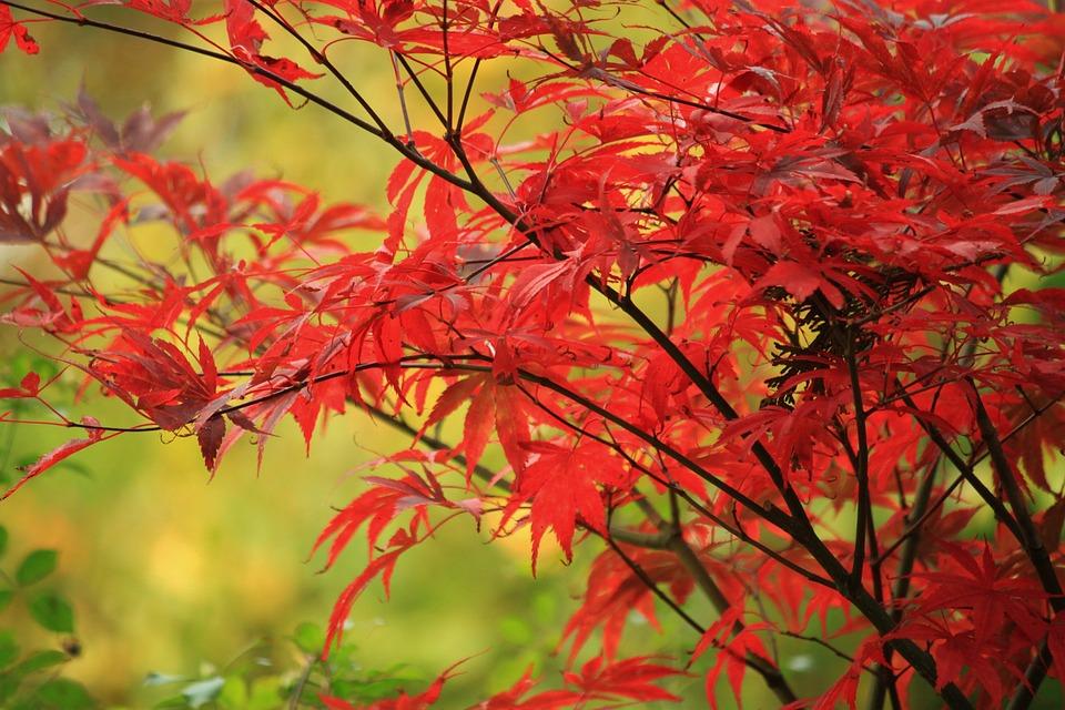 Autumn, Fall Foliage, Leaves, Leaves In The Autumn