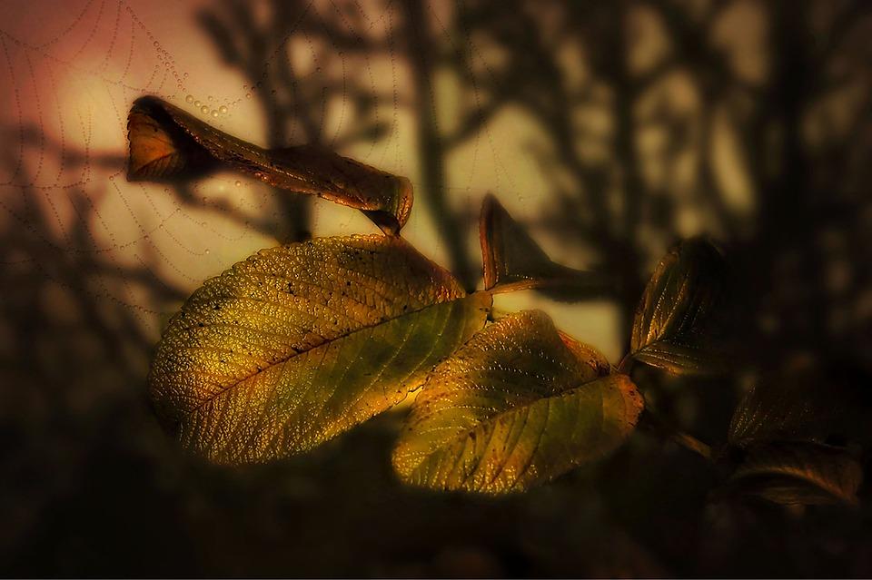 Nature, Autumn, Sun, Lighting, Leaves, Colorful