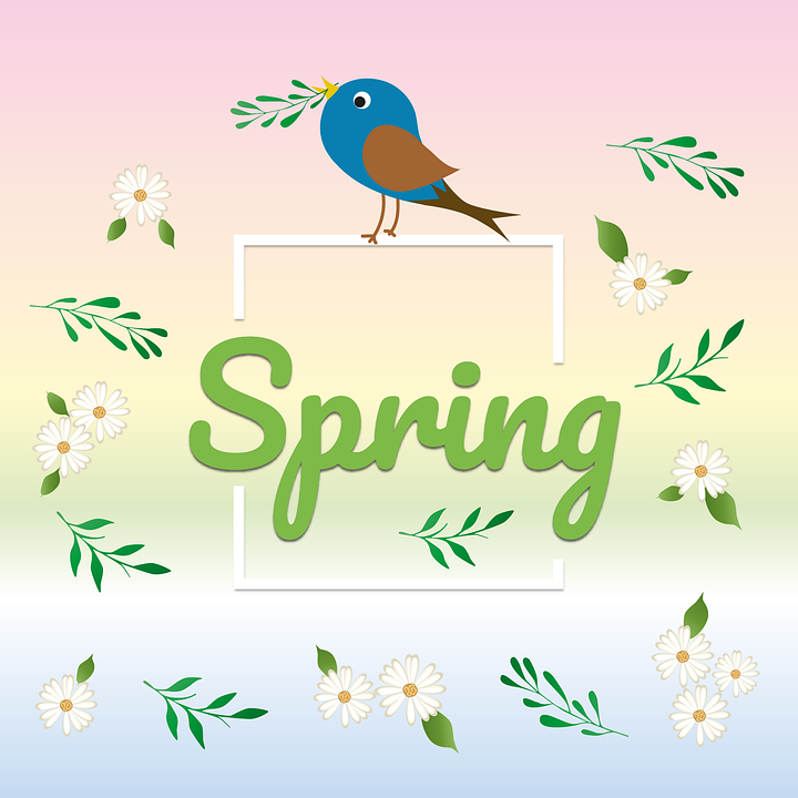 Season, Spring, Flowers, Leaves, Bird, Songbird, Live