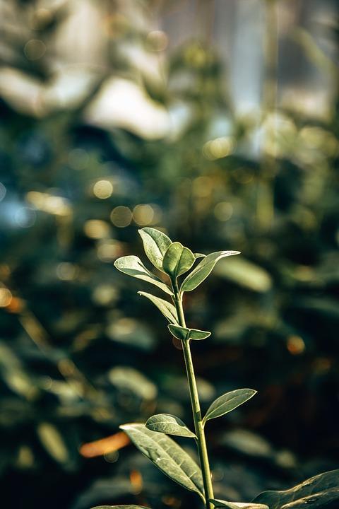 Leaves, Plant, Foliage, Green, Nature, Macro, Wallpaper