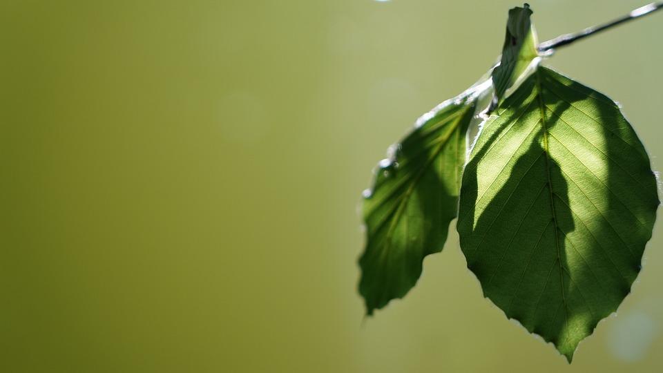 Plant, Leaves, Nature, Green, Macro, Leaf, Frame