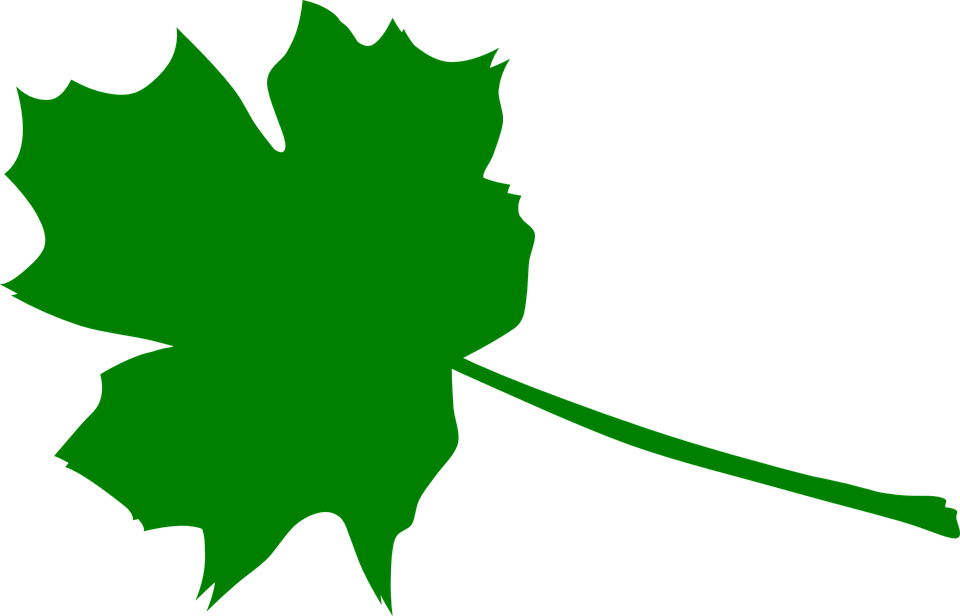 Maple, Green, Plant, Leaves