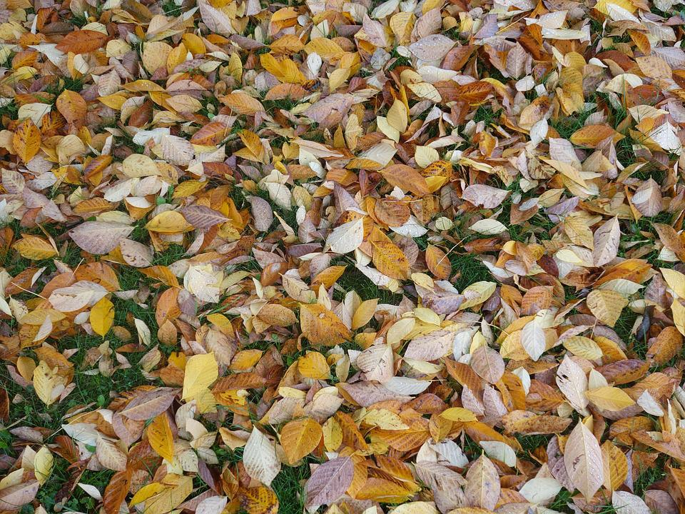 Fall Foliage, Leaves, Discolored, Moist, Autumn, Nature