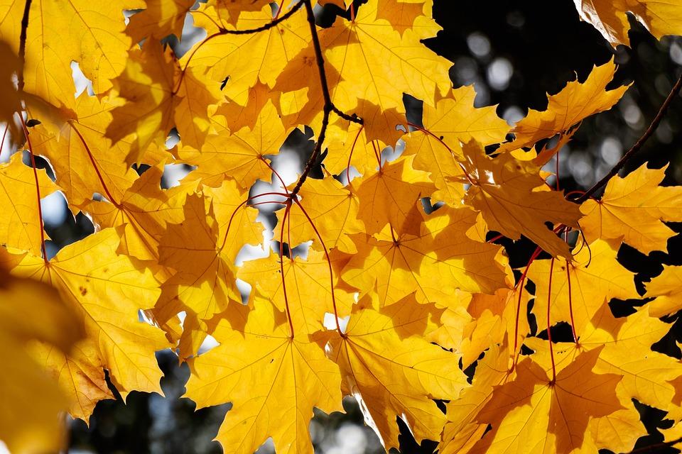 Tree, Leaves, Autumn, Colorful, Nature, Mood