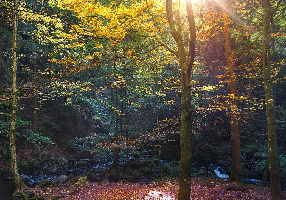 Forest, Leaves, October, Mood, Fall Color, Autumn