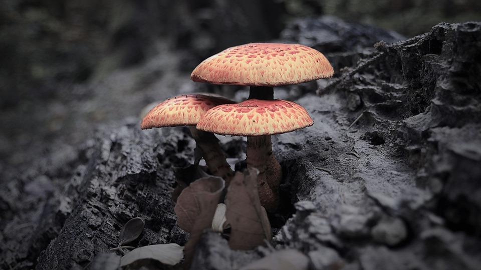 Autumn, Mushrooms, Forest, Nature, Leaves, Wood
