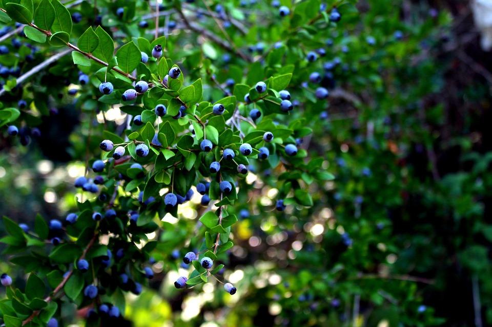Nature, Green, Tree, Leaves, Pastoral, Natural
