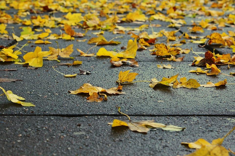 Leaves, Nature, Autumn, Autumn Colours, Branches
