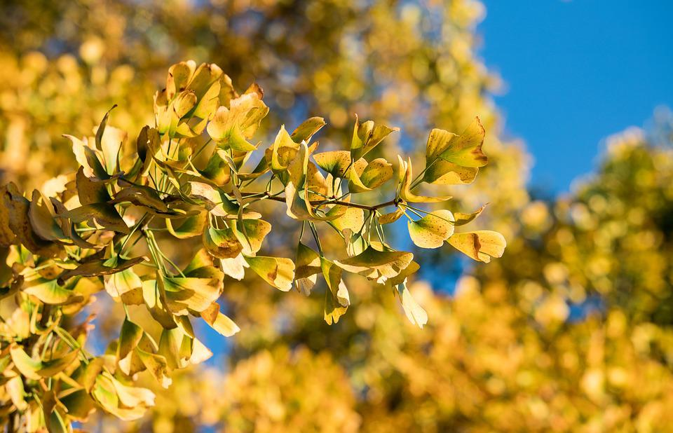 Leaves, Tree, Autumn, Fall Foliage, Yellow, Nature