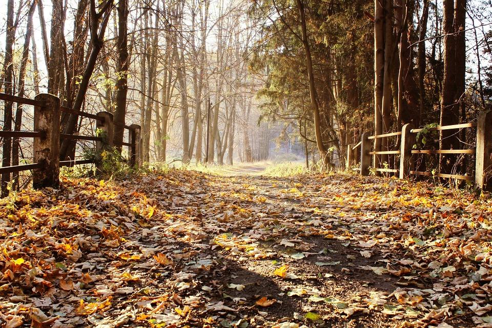 Bridge, Autumn, Fall, Nature, Landscape, Leaves