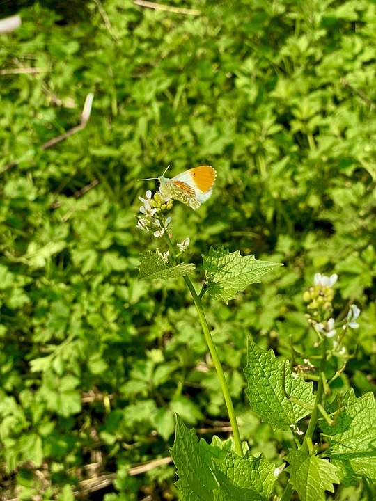 Butterfly, Wings, Leaves, Insect, Bug, Pollen, Nature