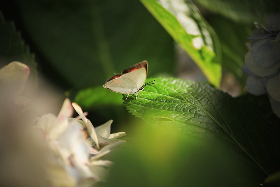 Bug, Butterfly, Insect, Leaves, Nature