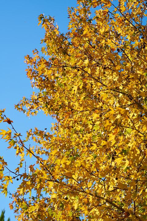 Autumn, Leaves, Nature, Color, Forest, Shiny, Tree
