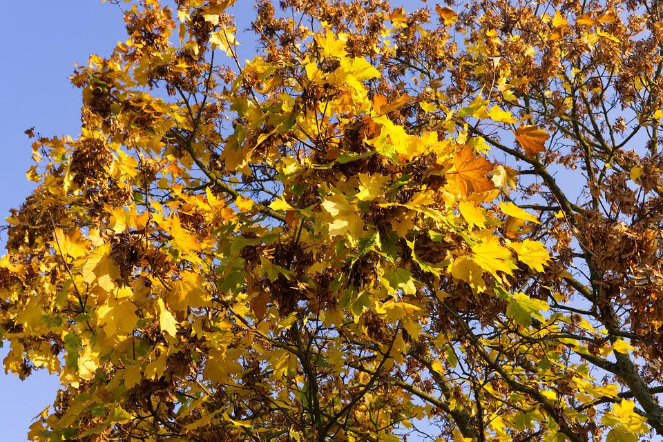 Tree, Leaves, Autumn, Colorful, Nature, Forest