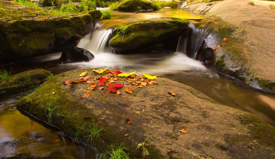 Creek, Leaves, Water, Nature, River, Forest, Autumn