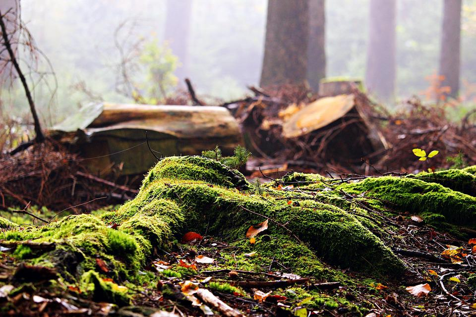 Forest, Moss, Tree Stump, Leaves, Autumn, Fog, Nature