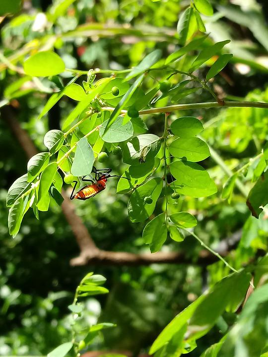 Insect, Garden, Leaves, Nature