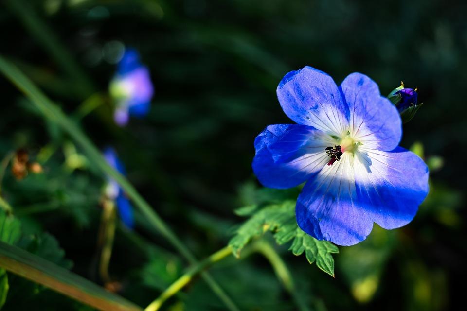Flowers, Plants, Leaves, Nature
