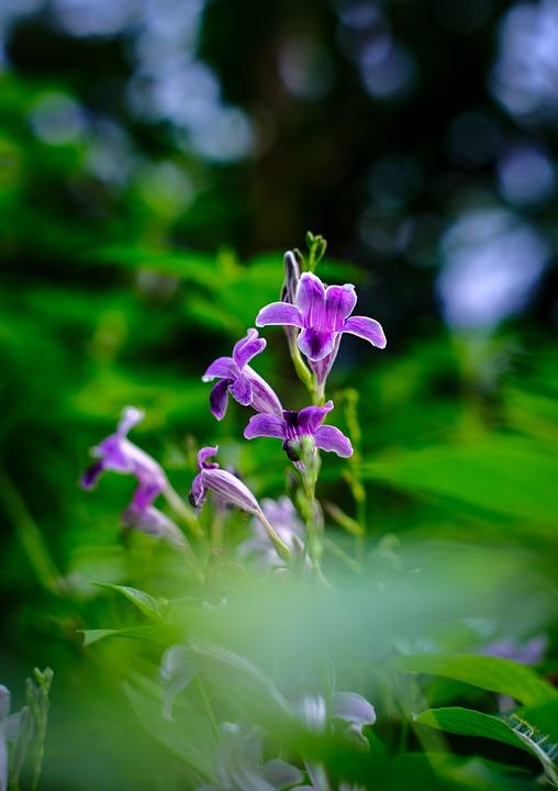 Flower, Leaves, Purple Flowers, Nature