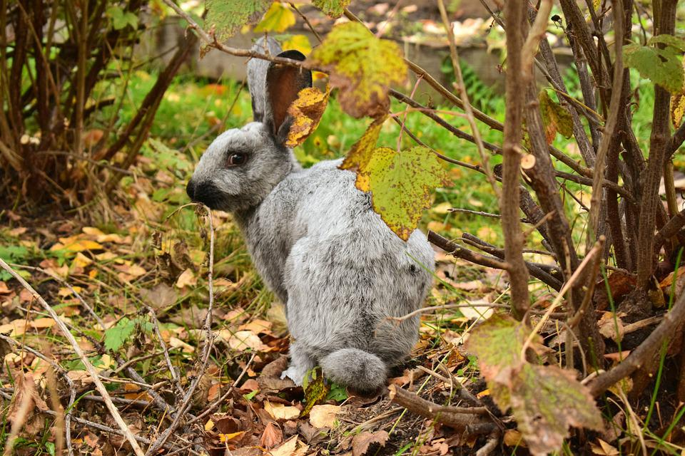 Rabbit, Autumn, Nature, Bunny, Leaves, Outdoors, Hare
