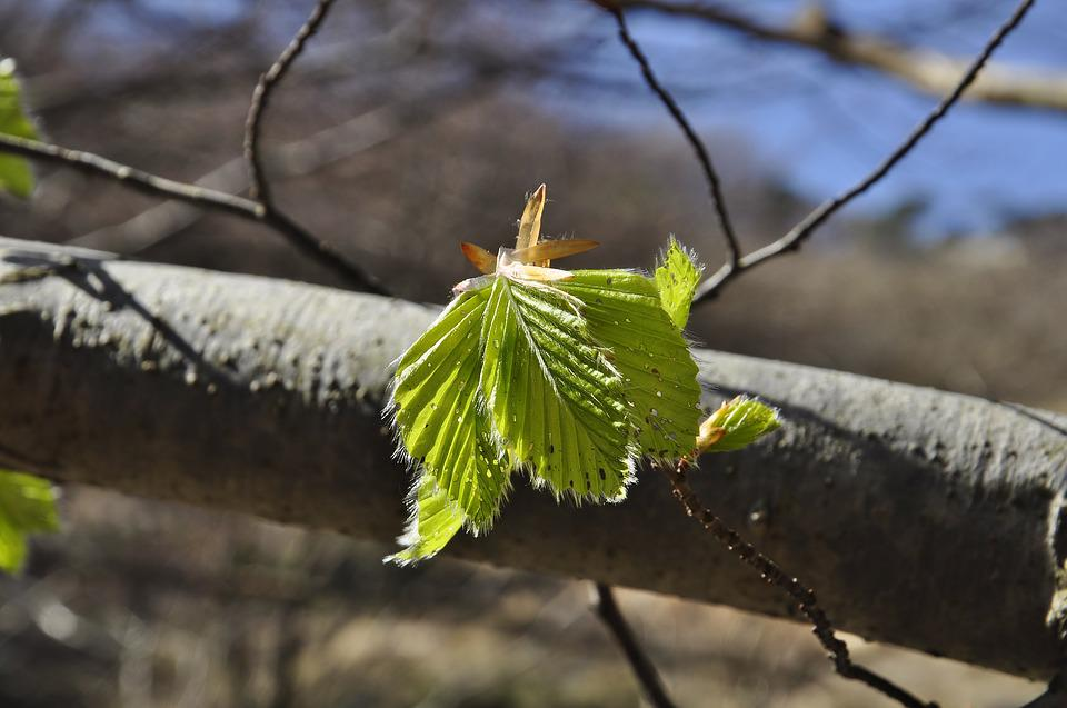 Nature, Leaves, Spring, Tree, Green, Forest
