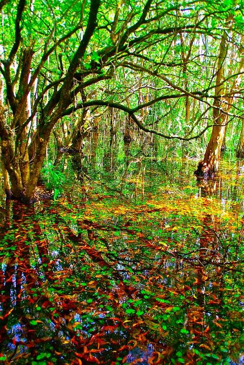 Swamp, Marsh, Leaves, Nature, Plant, Environment