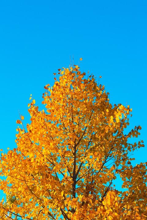 Tree, Orange, Sky, Blue, Leaves, Nature