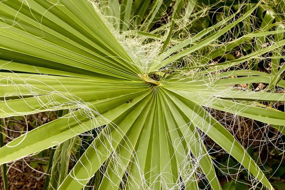 Palm, Leaf, Palm Tree, Desert, Nature, Leaves, Natural