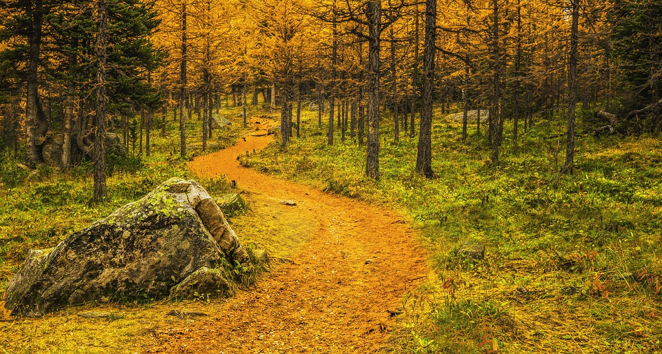 Autumn, Path, Forest, Nature, Trees, Mood, Leaves