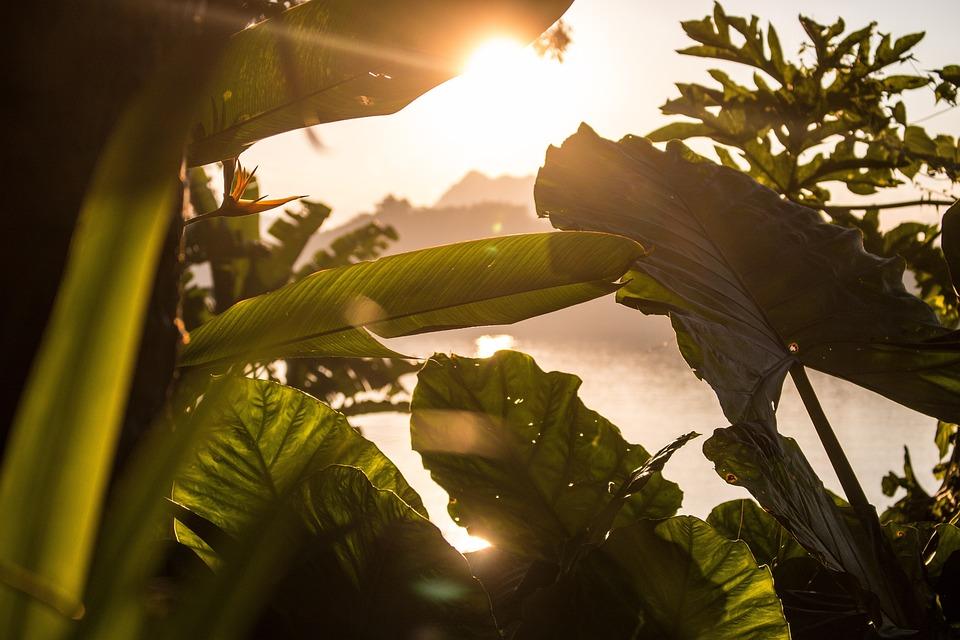 Plant, Jungle, Leaves, Tropical, Sunset, Evening, Laos