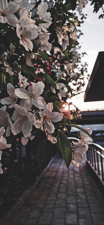 Flowers, Petals, Leaves, Plants, Floral, Flora, Sunset