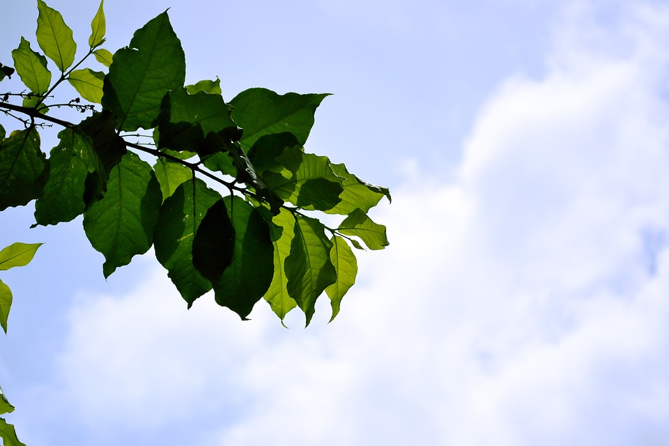 Leaves, Blue Sky, Sky, Plants, Nature, Sunshine