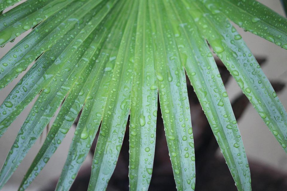 Plant, Leaves, Rainy Day, Raindrops