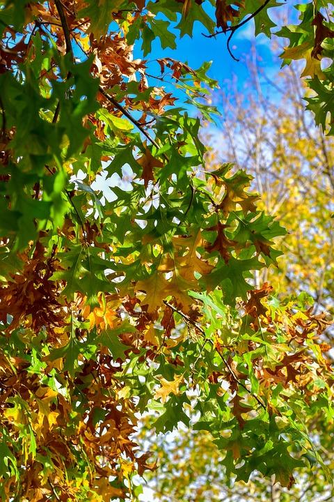 Leaves, Orange, Green, Nature, Leaf, Red, Tree, Autumn