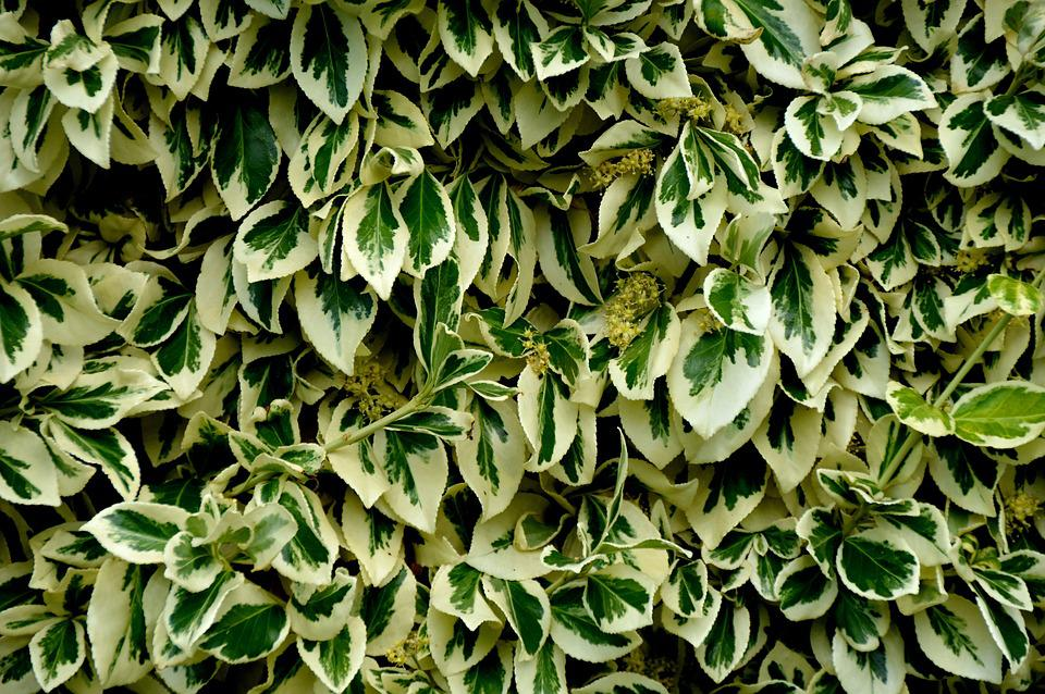 Leaves, Texture, Scroll Area From, Cover, Background