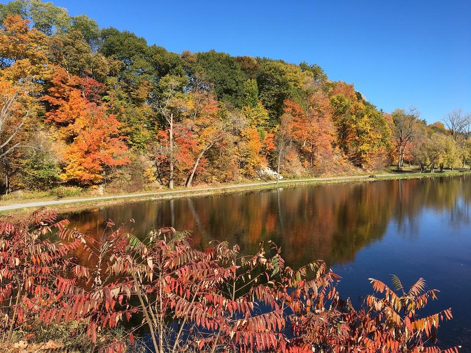 Autumn, Fall, Leaves, Nature, Fall Leaves, Season