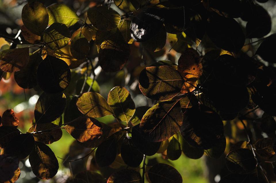 Leaves, Autumn, Shadow Games, Structure, Natural