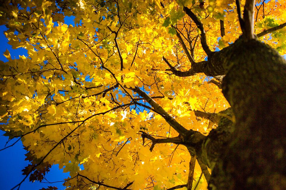 Autumn, Leaves, Maple, Sky, Yellow, Bright, Orange