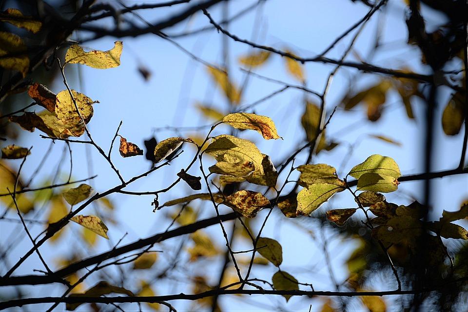 Autumn, Leaves, Aesthetic, Sky, Transience, Tree