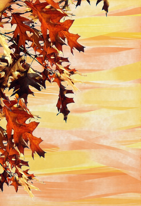 free photo leaves stationery autumn background emerge max pixel