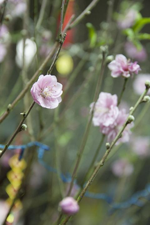 Flowers, Petals, Buds, Leaves, Stem, Flora, Botany