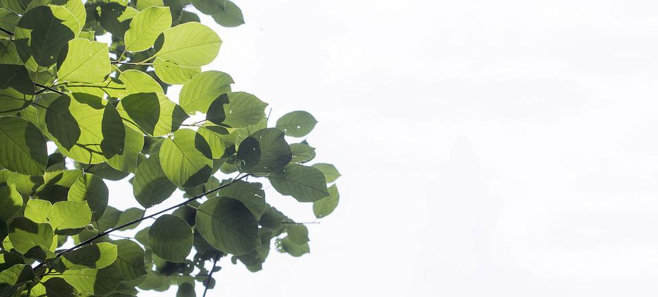 Summer, Leaves, Plant, Branch, Tree