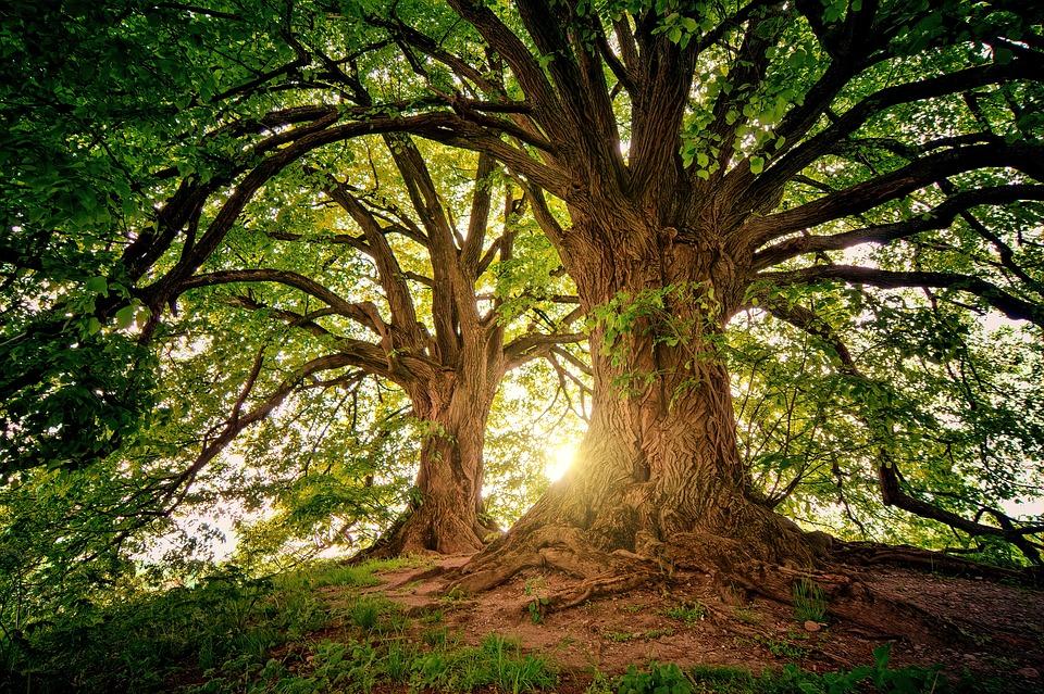 Tree, Nature, Wood, Sunset, Light, Leaves, Landscape