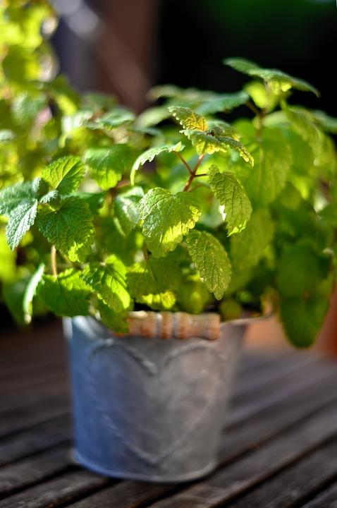 Mint, Herbs, Peppermint, Leaves, Health, Tea Herbs