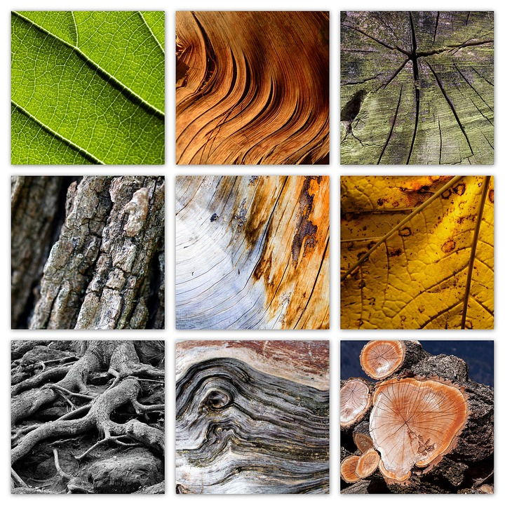 Tree, Nature, Wood, Leaves, Log, Texture, Colorful