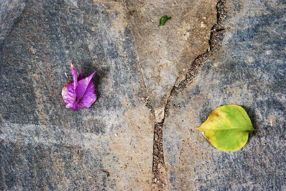 Leaves, Three, Division