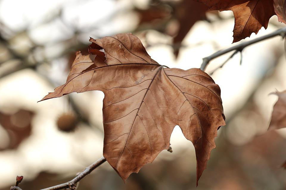 Tree, Brown, Branch, Autumn, Nature, Leaves, Color